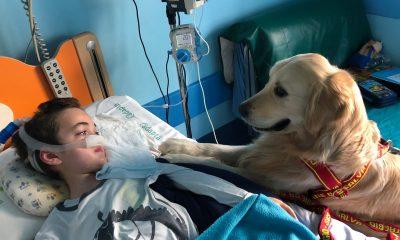 Gli animali da terapia: uno scambio emozionante
