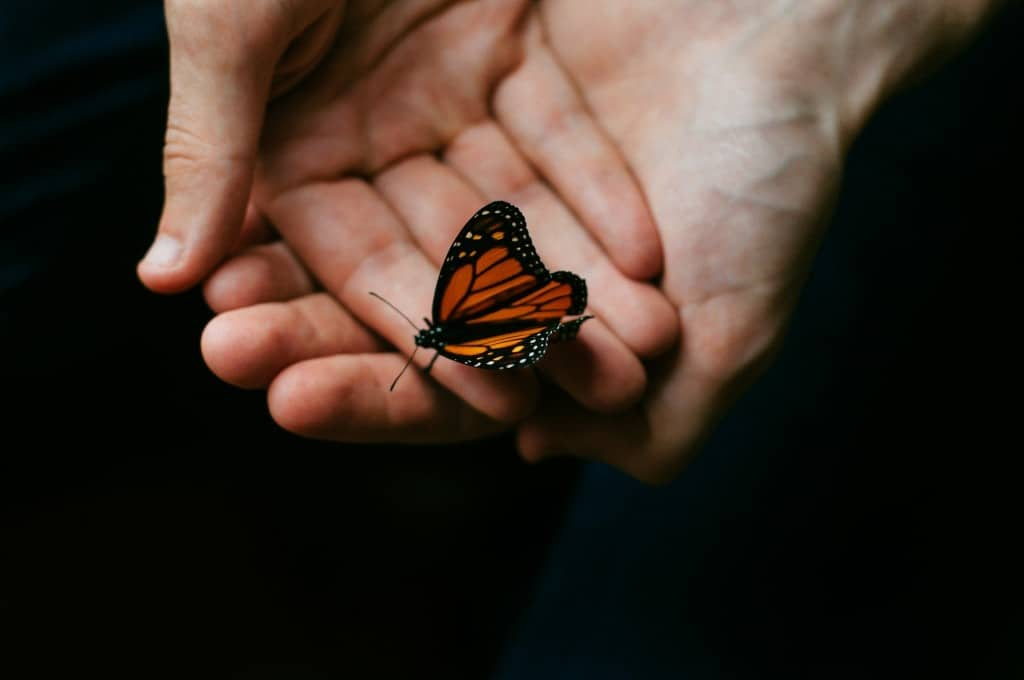 Percorsi di Farfalle